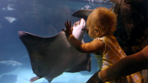 Baby Watching Sting Rays Footage