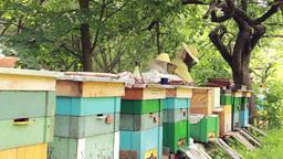 Bees. Beekeepers working in apiary 2 Footage