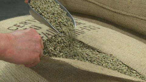 Green Coffee Beans ZI stock footage