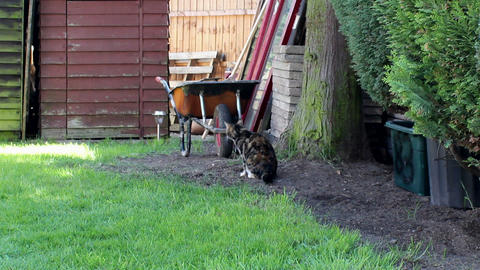 Striped cat in a garden Footage