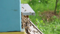 Bees flying into a beehive - slow motion 4 Live Action