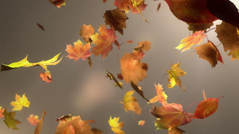 Falling Leaf Loopable Background Animation