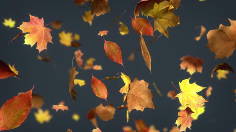 Falling leaves Loopable Background Stock Video Footage