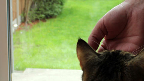 Cat Eating From Hand 2 stock footage
