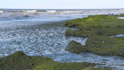 Eutrophication of the Baltic Sea 6 Footage