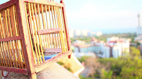 Birds Fly Out Of Cage stock footage