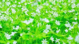 meadow plants Footage