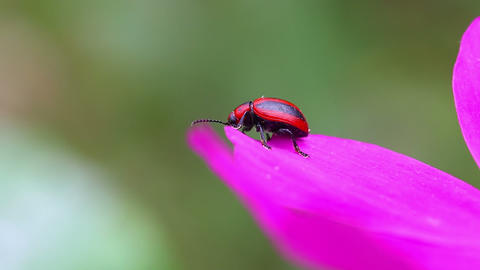 Tiny beetle Live Action