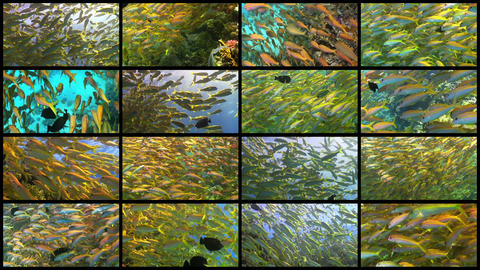 Video Wall Tropical Fish On Vibrant Coral Reef, 4K stock footage