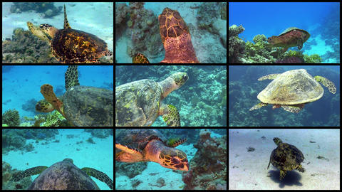 Video Wall Turtle Swimming Over Coral Reef, 4K 9 S stock footage