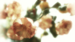 Artistic Bunch Of Flowers Stock Footage Footage