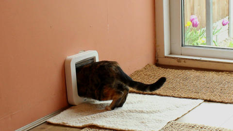 Cat exiting through microchip pet door in a wall Footage