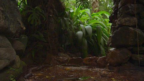 Water dripping in the Jardim Botanico Footage