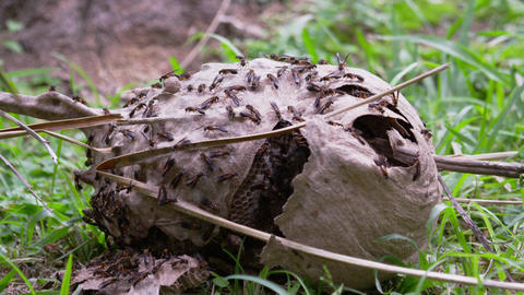 Static Shot Of Beehive On The Ground In Botanical  stock footage