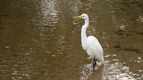 Shot Of White Bird Taking Flight From Water In Rio stock footage