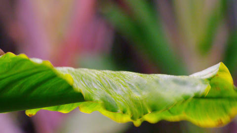 Static shot of beautiful yellow bellied bird moving on leaf petal Footage
