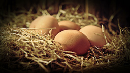 Eggs close up HD stock footage Footage