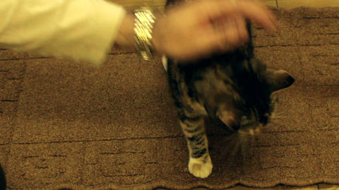 Male hand stroking a cat Footage