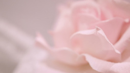 Pink Silk Rose Wedding Theme Stock Footage stock footage