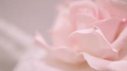 Pink Silk Rose wedding theme stock footage Footage