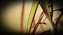 Yucca plant close up sliding shot stock footage Footage