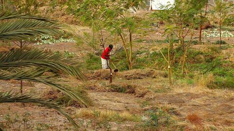 man gathering dry cut grass at Santiago Footage