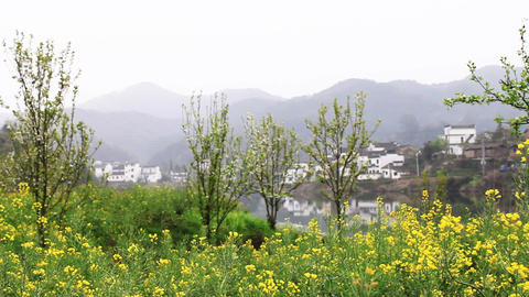 wuyuan19 Stock Video Footage