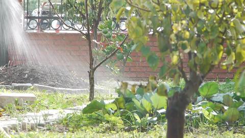 Farmer irrigating the soil Footage