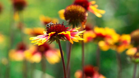 Working bees Stock Video Footage