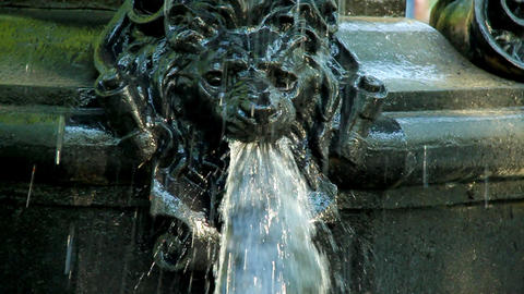 Fountain lion Stock Video Footage