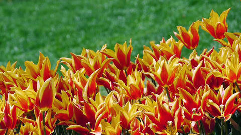 Garden with flowers Stock Video Footage