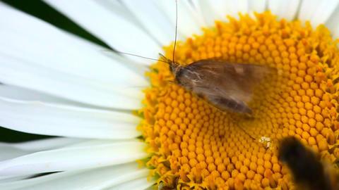Moth Footage
