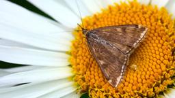 Moth Stock Video Footage