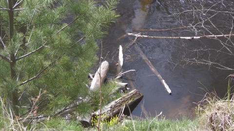 Looking down at river with logs Stock Video Footage