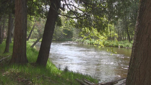 River water flow large trees in forground Stock Video Footage