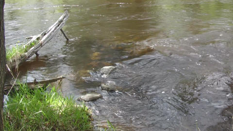 River water flow through rocks and logs Stock Video Footage