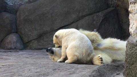 3273 White Bear Child 03 HD Stock Video Footage