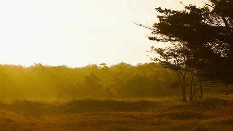 Meadow At Sunrise stock footage