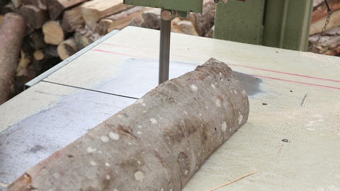 Worker cutting beech wood Footage