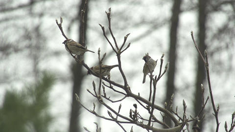 SLOW MOTION: Little birds fly away from the tree Footage