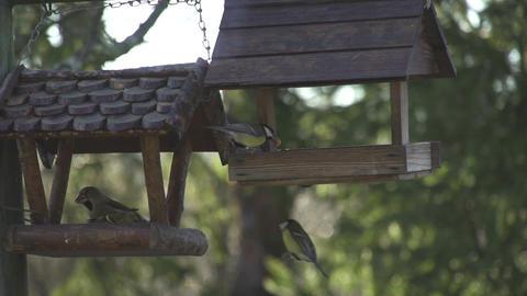 SLOW MOTION: Birds in bird feeder Footage