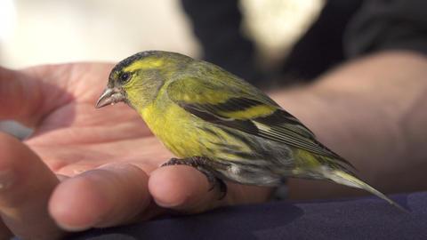 Little bird sitting on man's hand Footage