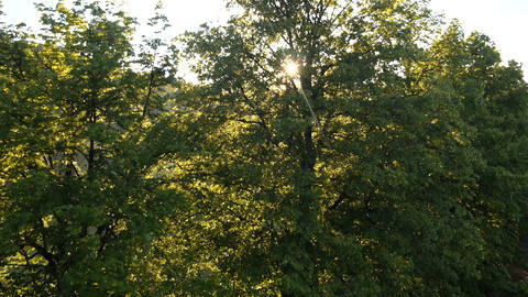 AERIAL: Sun shines through tree leaves Footage