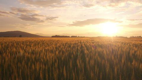 AERIAL: Fields