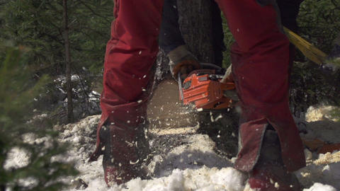 SLOW MOTION: Lumberjack Cutting A Tree stock footage