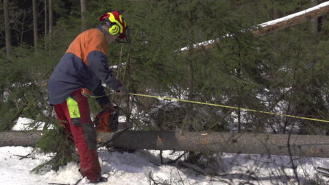 SLOW MOTION: Lumberjack working in the forest Footage