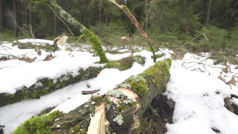 SLOW MOTIN: cutting tree with an axe Footage