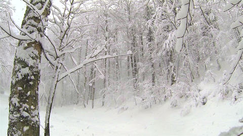 Heavy snow in nature Footage
