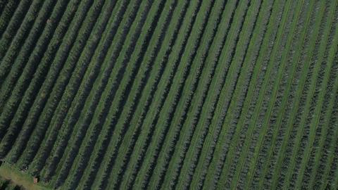 AERIAL: Fields 1
