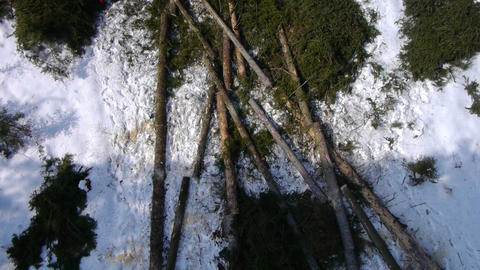 AERIAL: two loggers cutting branches Footage